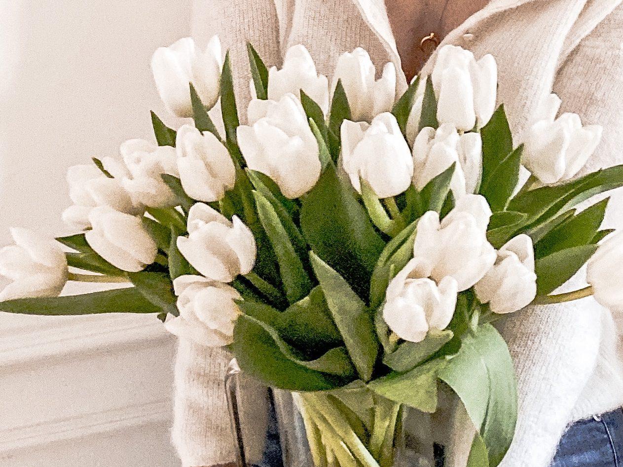 March Tulips Tulipani Marzo